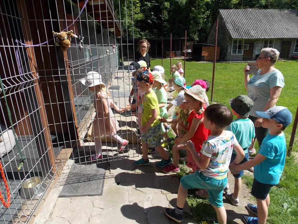 Przedszkolaki pomagają bezdomnym zwierzętom